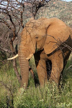 Elefant im Pilanesberg Nationalpark