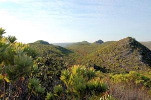 Fynbos Was Ist Das Eigentlich S 252 Dafrika Urlaub